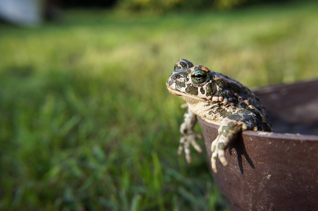 toad-1715615_1280